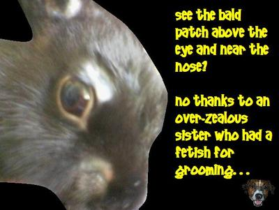 bunny_grooming_02